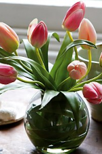 Tulips in Round Glass Vase