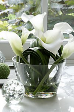 Creamy White Lily in Vase